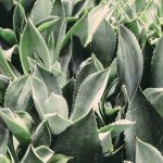 Know your ingredients: Aloe Vera