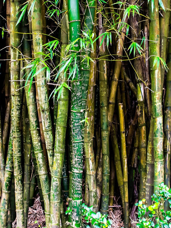 Not Just Panda Food: Why Bamboo Is The Next Big Thing In Korean Skincare